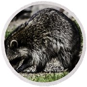 Raccoon Round Beach Towel