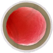 Red Blood Cell In Hypotonic Solution Round Beach Towel