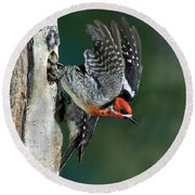 Red-breasted Sapsucker Round Beach Towel