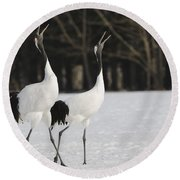 Red-crowned Cranes Courting Round Beach Towel