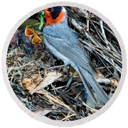 Red-faced Warbler At Nest With Young Round Beach Towel