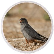Red Footed Falcon Falco Vespertinus Round Beach Towel