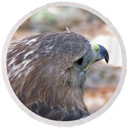 Red Tailed Hawk 2  Round Beach Towel
