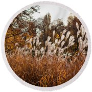 Reeds Highlighted By The Sun Round Beach Towel