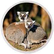 Ring Tailed Lemur Round Beach Towel