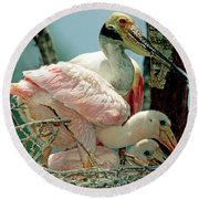 Roseate Spoonbill Adult With Young Round Beach Towel