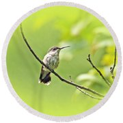 Ruby-throated Hummingbird - Immature Female - Archilochus Colubris  Round Beach Towel