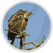 Rueppells Vulture Round Beach Towel
