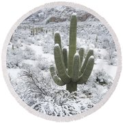 Saguaro Cactus After Rare Desert Round Beach Towel