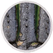 Saguaro Cactus Close-up Round Beach Towel