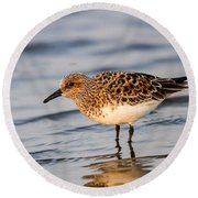 Sanderling Round Beach Towel