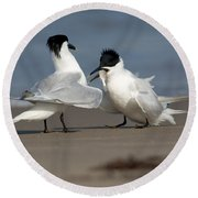 Sandwich Tern Bringing Fish To Its Mate Round Beach Towel