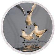 Sandwich Tern Round Beach Towel