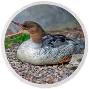 Scaly-sided Merganser Hen Round Beach Towel