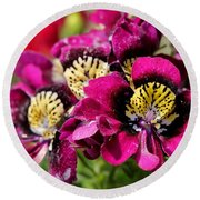 Schizanthus From The Hit Parade Mix Round Beach Towel
