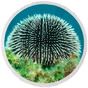 Sea Urchin Round Beach Towel