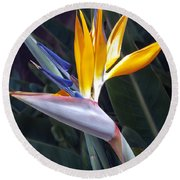 Seaport Bird Of Paradise Round Beach Towel