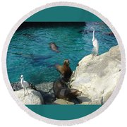 Seaworld Sea Lions Round Beach Towel