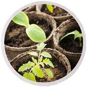 Seedlings Growing In Peat Moss Pots Round Beach Towel