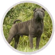 Shar Pei Dog Round Beach Towel
