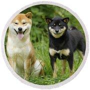 Shiba Inu Dogs Round Beach Towel