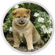 Shiba Inu Puppy Dog Round Beach Towel