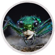 Six-spotted Green Tiger Beetle Round Beach Towel