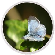 Small Blue Butterfly Round Beach Towel
