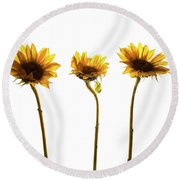 Small Sunflowers Or Helianthus Round Beach Towel