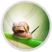Snail On Green Stem Round Beach Towel by Johan Swanepoel