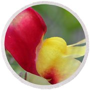 Snapdragon Named Floral Showers Red And Yellow Bicolour Round Beach Towel