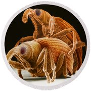 Snout Beetles Round Beach Towel