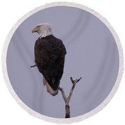 Solo  Bald Eagle Round Beach Towel