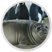 Southern Elephant Seal  Round Beach Towel
