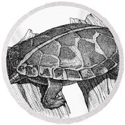 Southern Painted Turtle Round Beach Towel