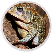 Southern Toad Bufo Terrestris Round Beach Towel