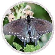 Spicebush Swallowtail Papilio Troilus Round Beach Towel