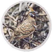 Spinifex Pigeon Round Beach Towel
