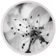Spring Blooms 6692 Round Beach Towel
