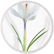 Spring Crocus Flower Round Beach Towel