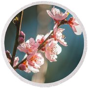 Spring Peach Tree Blossom Round Beach Towel