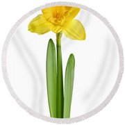 Spring Yellow Daffodil Round Beach Towel