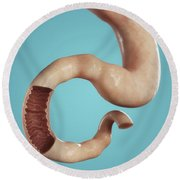 Stomach And Duodenum Round Beach Towel