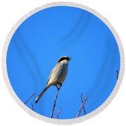 The Lookout Shrike Or Butcher Bird Art Round Beach Towel