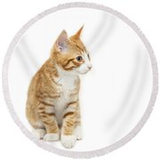 Stripy Ginger Kitten Sitting Down Round Beach Towel
