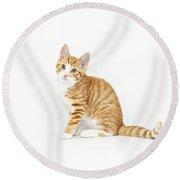 Stripy Red Kitten Sitting Down Round Beach Towel