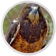 Swainson's Hawk Round Beach Towel