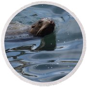 Swimming Sea Lion Round Beach Towel