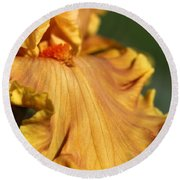 Tall Bearded Iris Named Penny Lane Round Beach Towel