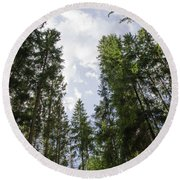 Tall Spruce Trees Round Beach Towel